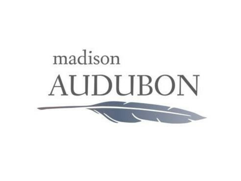 Madison Audubon Society: breaking down language barriers in the classroom through birds